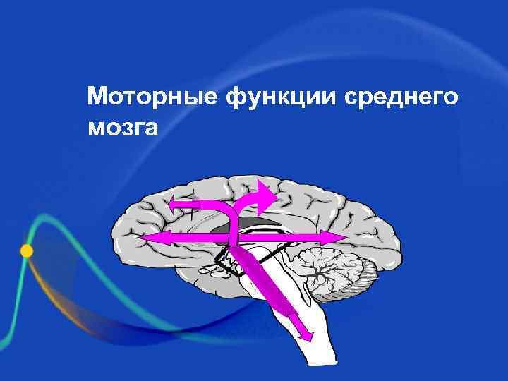 Моторные функции среднего мозга