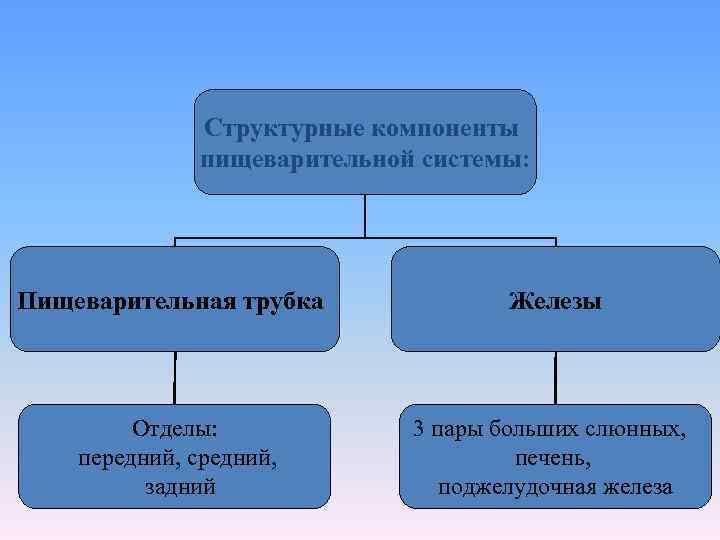 Структурные компоненты    пищеварительной системы: Пищеварительная трубка