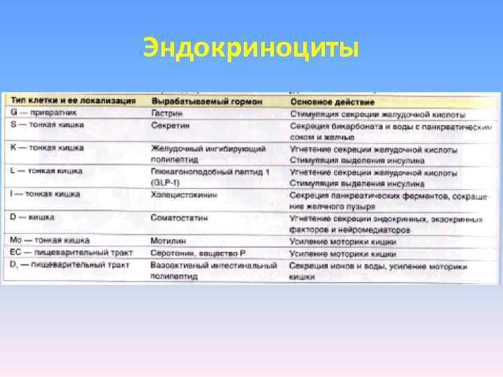 Эндокриноциты