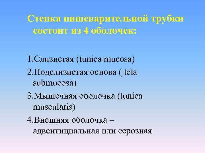 Стенка пищеварительной трубки  состоит из 4 оболочек:  1. Слизистая (tunica mucosa) 2.