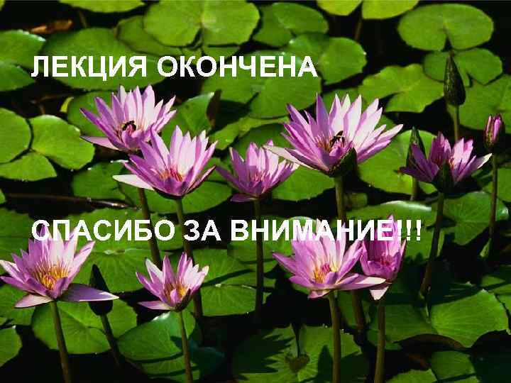 ЛЕКЦИЯ ОКОНЧЕНА СПАСИБО ЗА ВНИМАНИЕ!!!