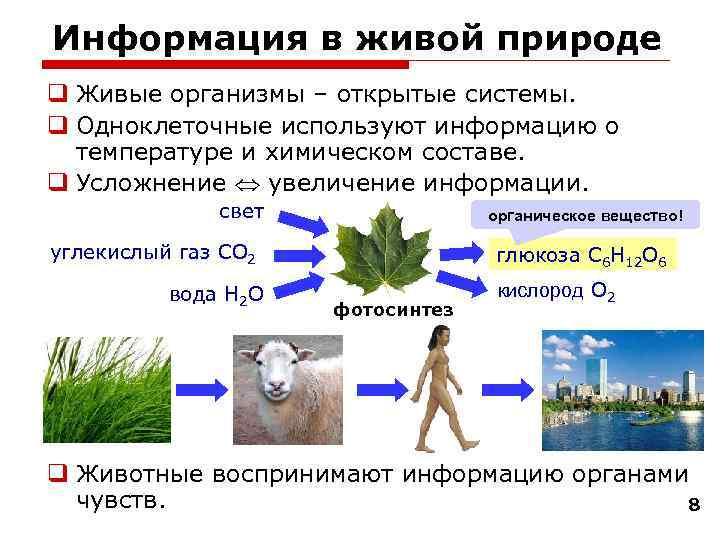 Информация в живой природе q Живые организмы – открытые системы. q Одноклеточные используют информацию