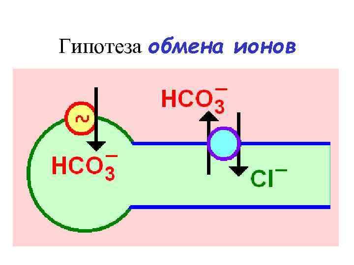 Гипотеза обмена ионов