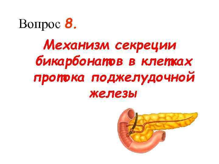 Вопрос 8. Механизм секреции  бикарбонатов в клетках  протока поджелудочной  железы