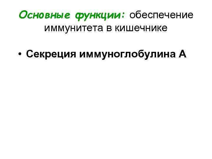 Основные функции: обеспечение иммунитета в кишечнике  • Секреция иммуноглобулина А