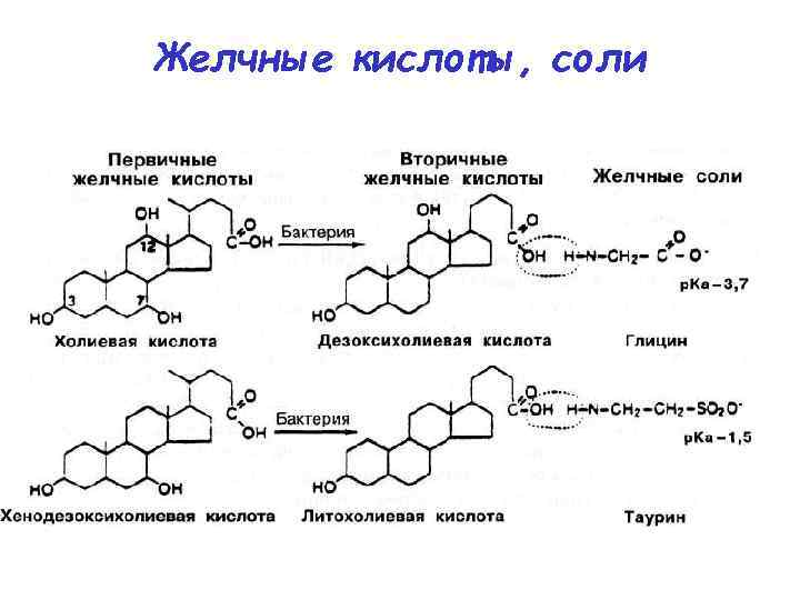 Желчные кислоты, соли