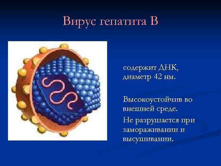 Вирус гепатита В   содержит ДНК,  диаметр 42 нм.   Высокоустойчив
