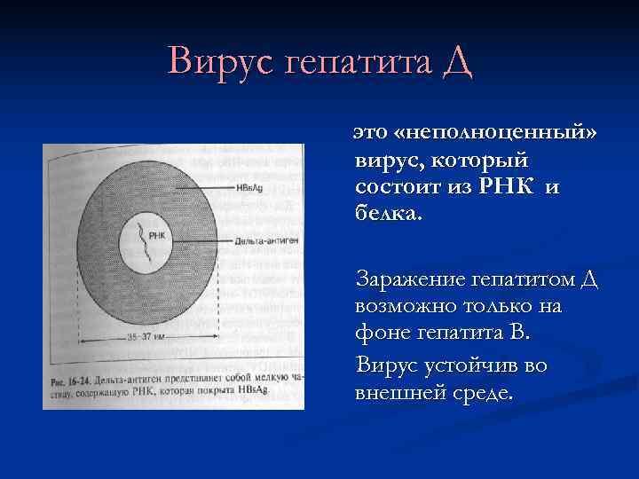 Вирус гепатита Д   это «неполноценный»  вирус, который   состоит из