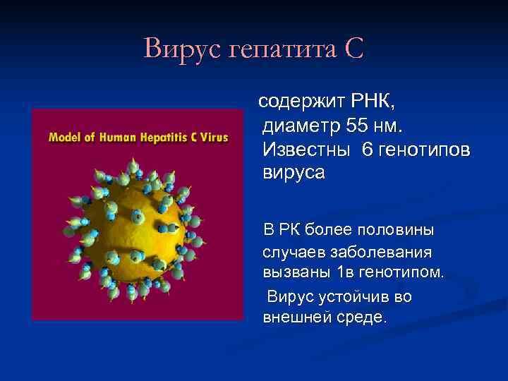 Вирус гепатита С   содержит РНК,   диаметр 55 нм.