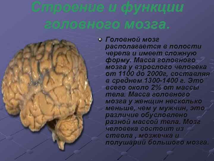 Строение и функции головного мозга.   Головной мозг   располагается в полости