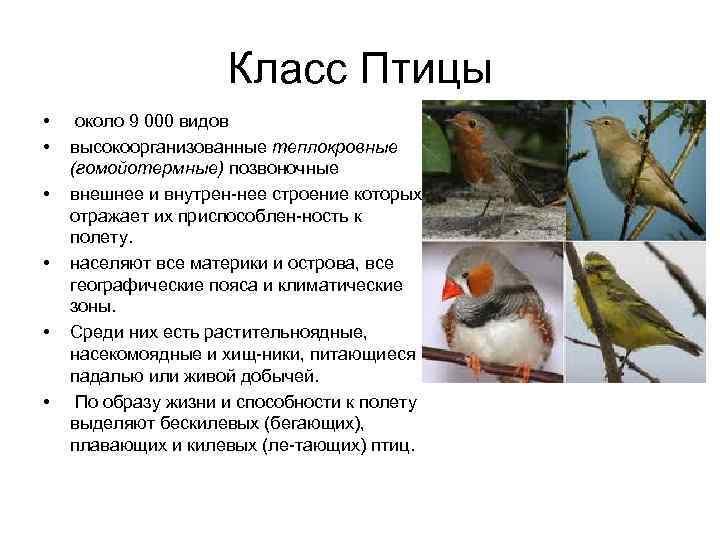 Класс Птицы • около 9 000 видов •