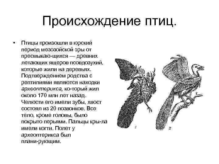 Происхождение птиц.  •  Птицы произошли в юрский период мезозойской эры