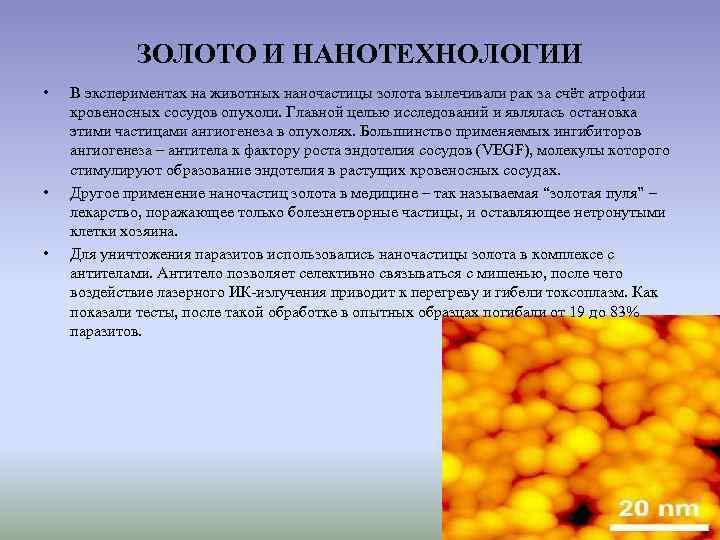 ЗОЛОТО И НАНОТЕХНОЛОГИИ •  В экспериментах на животных наночастицы золота
