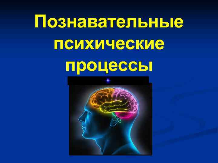 Познавательные  психические  процессы