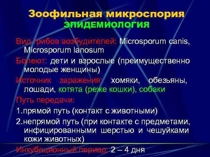 Зоофильная микроспория  ЭПИДЕМИОЛОГИЯ Вид грибов возбудителей: Microsporum canis,  Microsporum lanosum Болеют: