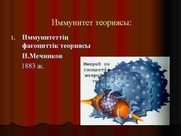 Иммунитет теориясы: 1.  Иммунитеттің фагоциттік теориясы И. Мечников 1883 ж.
