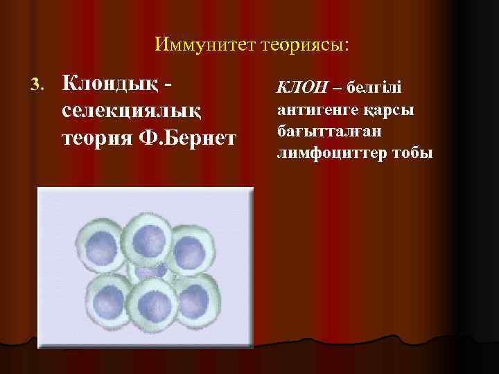 Иммунитет теориясы: 3.  Клондық -   КЛОН – белгілі селекциялық