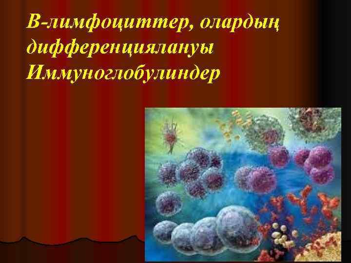 В-лимфоциттер, олардың дифференциялануы Иммуноглобулиндер