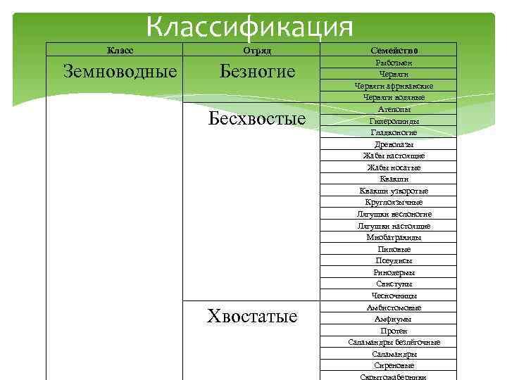 Классификация Класс   Отряд  Семейство