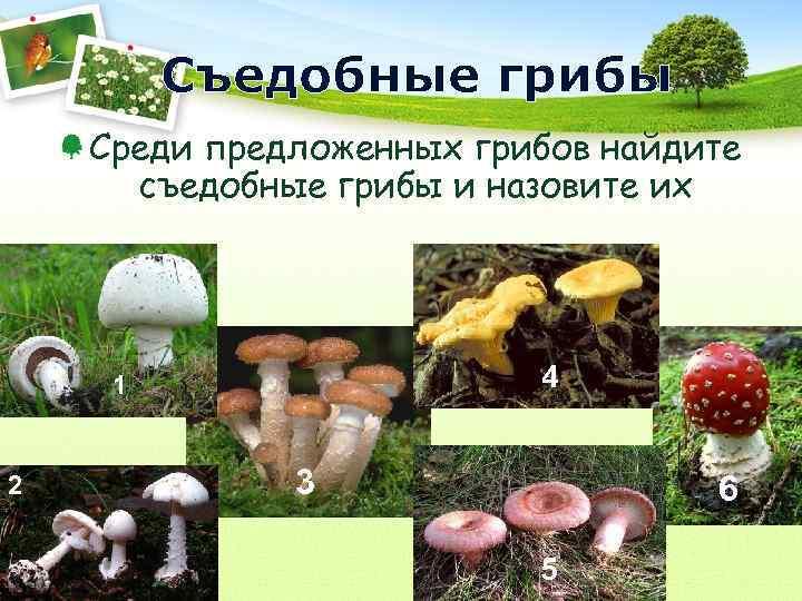 Съедобные грибы Среди предложенных грибов найдите  съедобные грибы и назовите