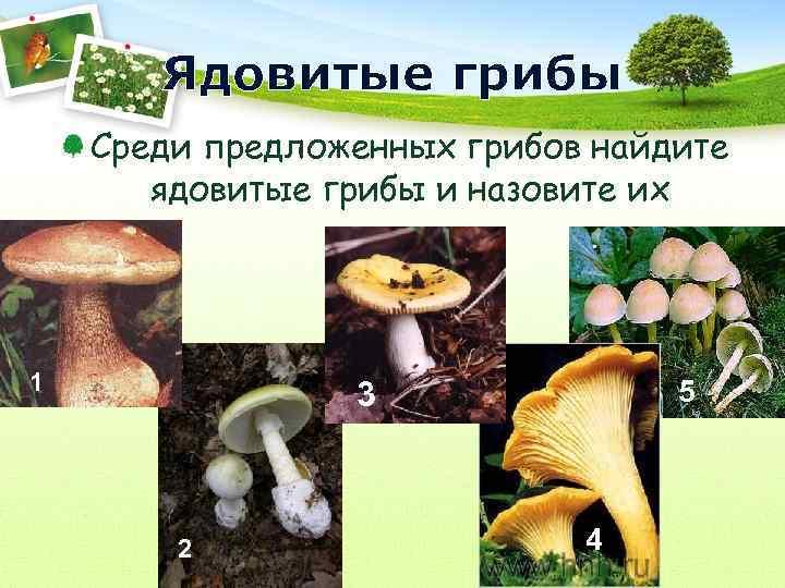 Ядовитые грибы Среди предложенных грибов найдите  ядовитые грибы и назовите их