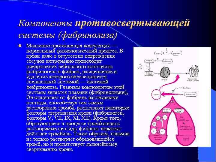 Компоненты противосвертывающей системы (фибринолиза) l  Медленно протекающая коагуляция — нормальный физиологический процесс. В