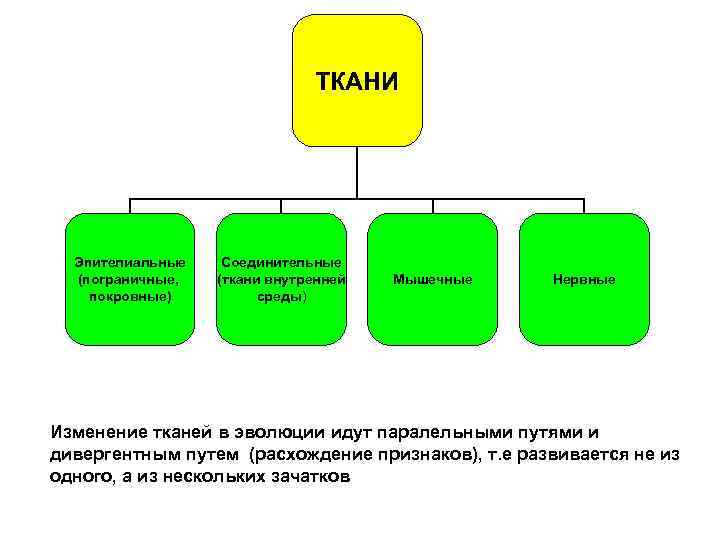 ТКАНИ  Эпителиальные  Соединительные  (пограничные,  (ткани
