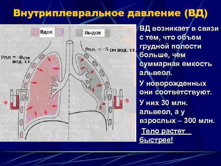 Внутриплевральное давление (ВД)     ВД возникает в связи