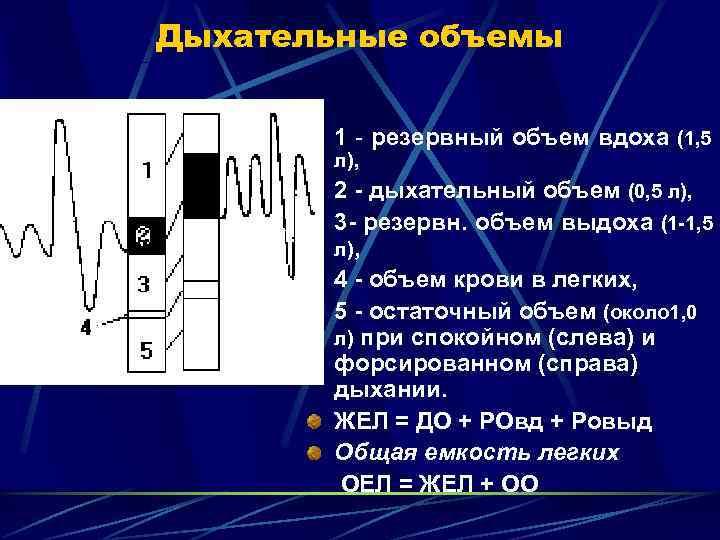 Дыхательные объемы   1 - резервный объем вдоха (1, 5  л),