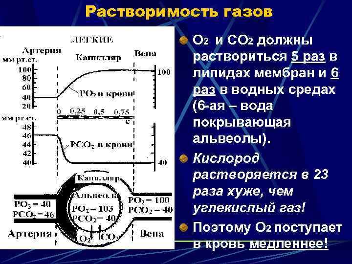 Растворимость газов  О 2 и СО 2 должны  раствориться 5 раз в