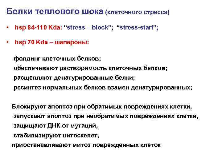 """Белки теплового шока (клеточного стресса) • hsp 84 -110 Kda: """"stress – block""""; """"stress-start"""";"""