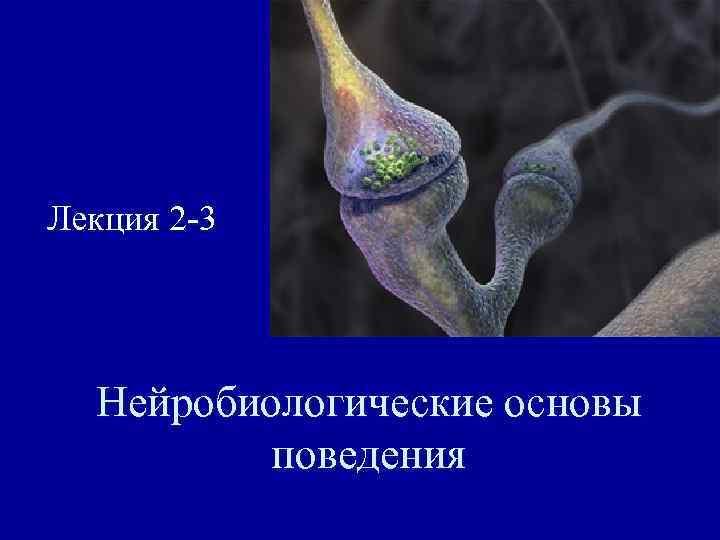 Лекция 2 -3  Нейробиологические основы   поведения