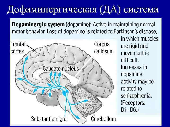 Дофаминергическая (ДА) система