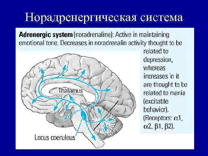 Норадренергическая система