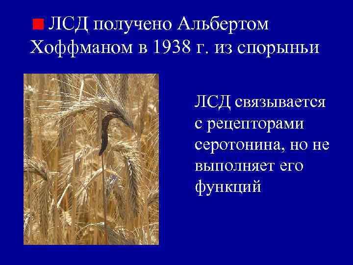 ЛСД получено Альбертом Хоффманом в 1938 г. из спорыньи    ЛСД