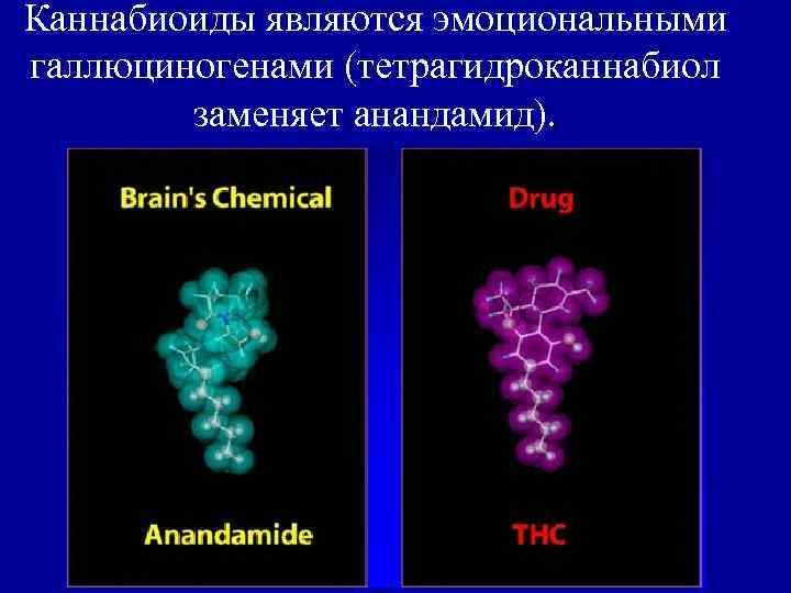 Каннабиоиды являются эмоциональными галлюциногенами (тетрагидроканнабиол   заменяет анандамид).