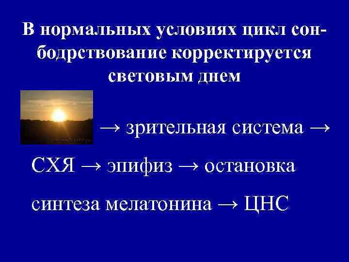 В нормальных условиях цикл сон- бодрствование корректируется   световым днем   →