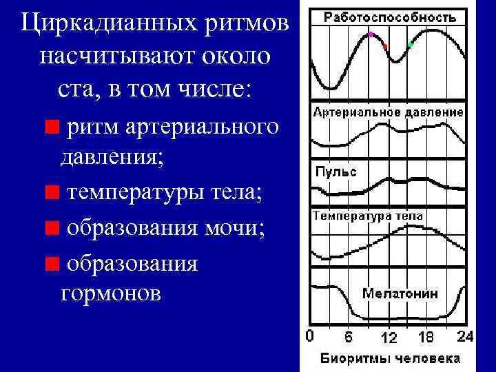 Циркадианных ритмов насчитывают около  ста, в том числе: ритм артериального  давления; температуры