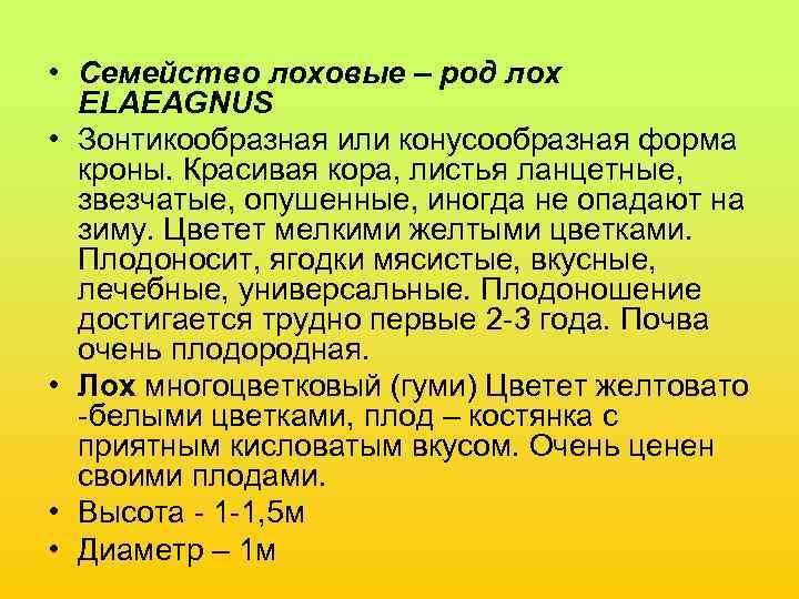 • Семейство лоховые – род лох  ELAEAGNUS • Зонтикообразная или конусообразная форма