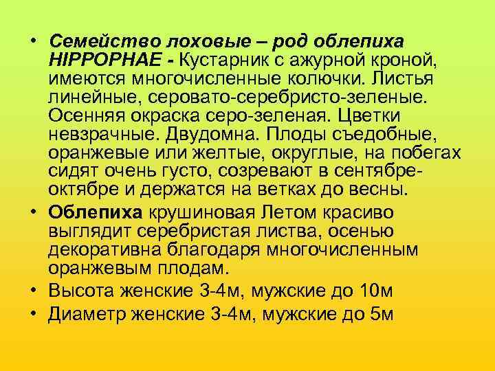 • Семейство лоховые – род облепиха  HIPPOPHAE - Кустарник с ажурной кроной,