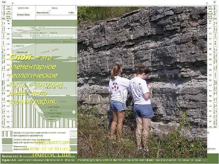 Слой – это элементарное геологическое тело, с которым имеет дело стратиграфия.   Ордовикские
