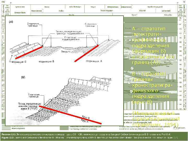 А – стратотип литострати- графического подразделения (формация В) и стратотипы его границ (А);