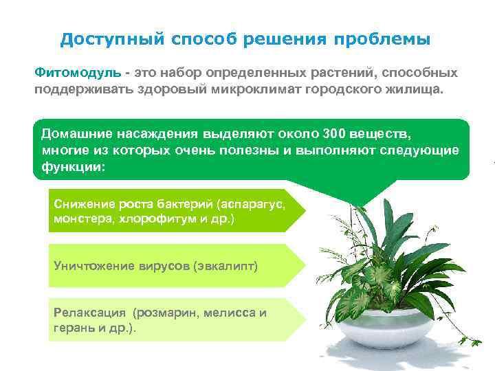 Доступный способ решения проблемы Фитомодуль - это набор определенных растений, способных поддерживать