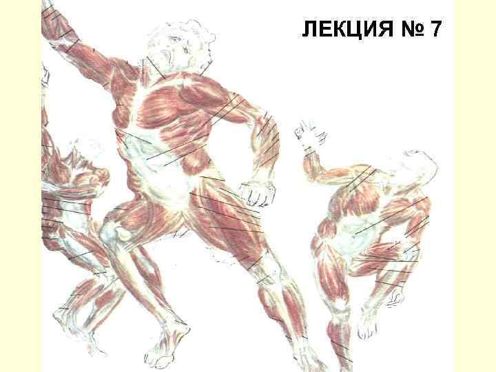 ЛЕКЦИЯ № 7