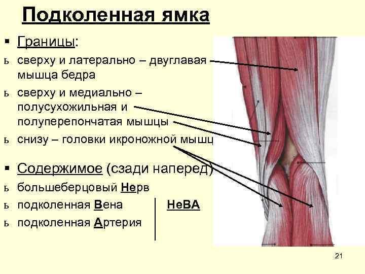 Подколенная ямка § Границы: ь сверху и латерально – двуглавая  мышца бедра