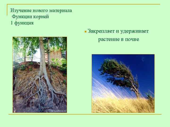 Изучение нового материала Функции корней 1 функция     n Закрепляет и