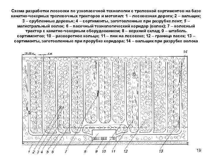 Схема разработки лесосеки по узкопасечной технологии с трелевкой сортиментов на базе канатно чокерных трелевочных