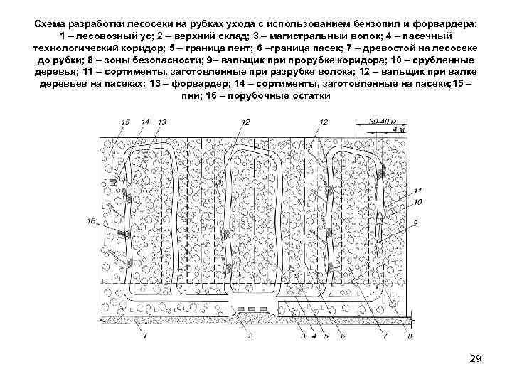 Схема разработки лесосеки на рубках ухода с использованием бензопил и форвардера:  1 –
