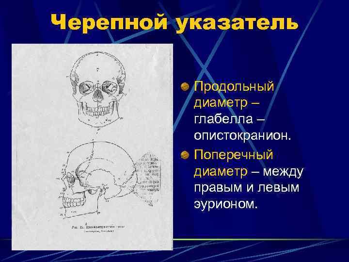 Черепной указатель  Продольный  диаметр –  глабелла –  опистокранион.  Поперечный