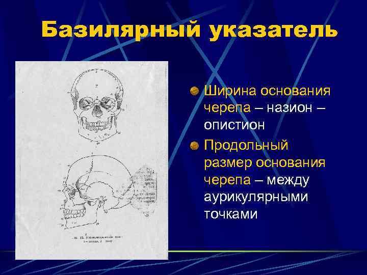 Базилярный указатель  Ширина основания  черепа – назион –  опистион  Продольный